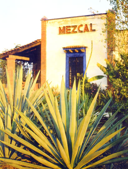 Mezcal and Tequila are the best known Mexican liquors
