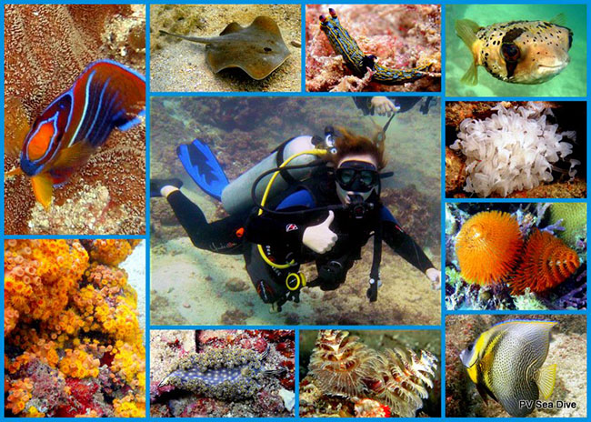 PV Sea Dive Tours