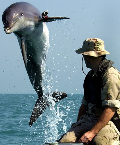 Soldier Dolphins