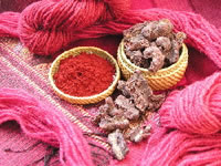 Cochineal Dye and Insect