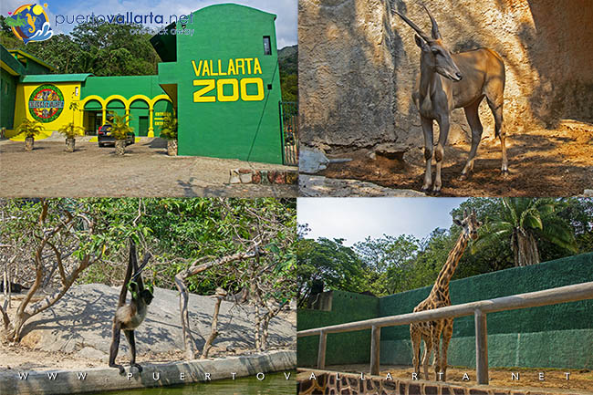 Puerto Vallarta Zoological Garden